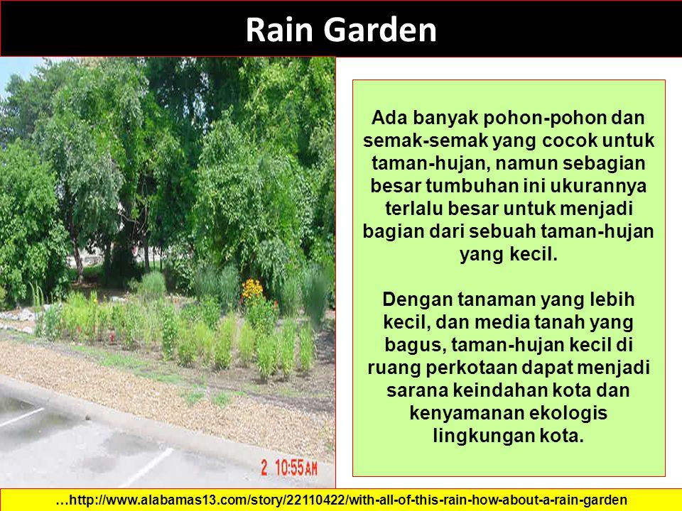 Rain Garden …http://www.alabamas13.com/story/22110422/with-all-of-this-rain-how-about-a-rain-garden Ada banyak pohon-pohon dan semak-semak yang cocok untuk taman-hujan, namun sebagian besar tumbuhan ini ukurannya terlalu besar untuk menjadi bagian dari sebuah taman-hujan yang kecil.