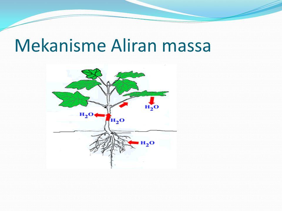 Mekanisme Aliran massa
