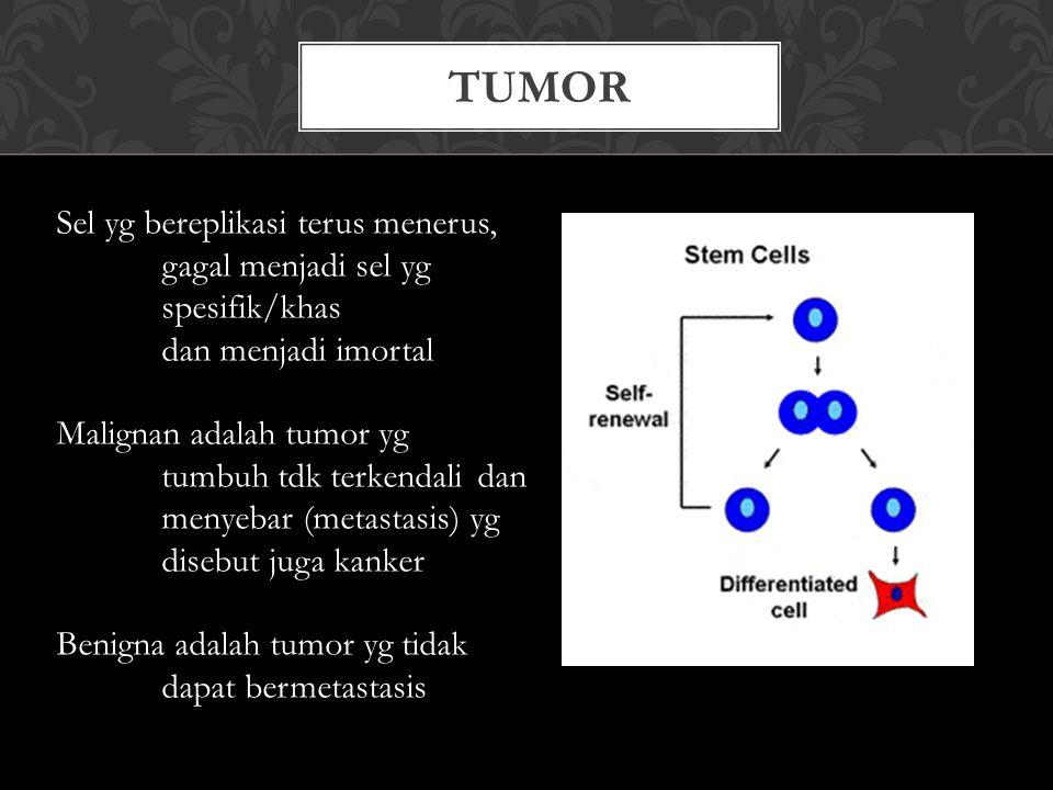 TUMOR Sel yg bereplikasi terus menerus, gagal menjadi sel yg spesifik/khas dan menjadi imortal Malignan adalah tumor yg tumbuh tdk terkendali dan meny