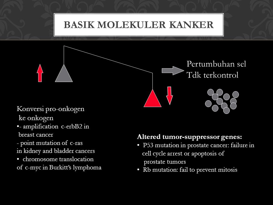 BASIK MOLEKULER KANKER Pertumbuhan sel Tdk terkontrol Konversi pro-onkogen ke onkogen - amplification c-erbB2 in breast cancer - point mutation of c-r