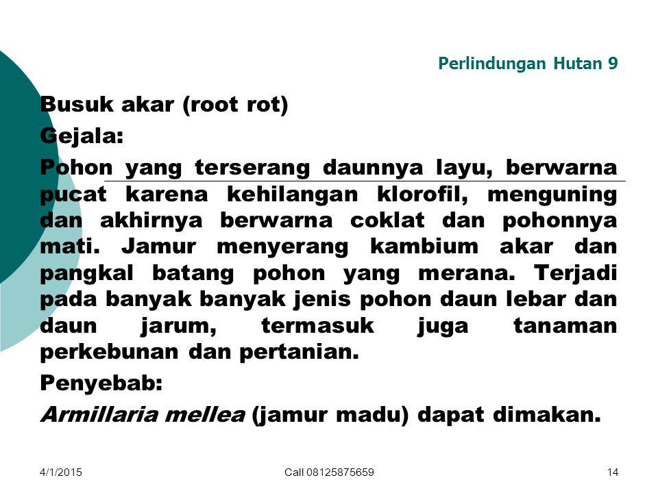 Perlindungan Hutan 9 Busuk akar (root rot) Gejala: Pohon yang terserang daunnya layu, berwarna pucat karena kehilangan klorofil, menguning dan akhirny