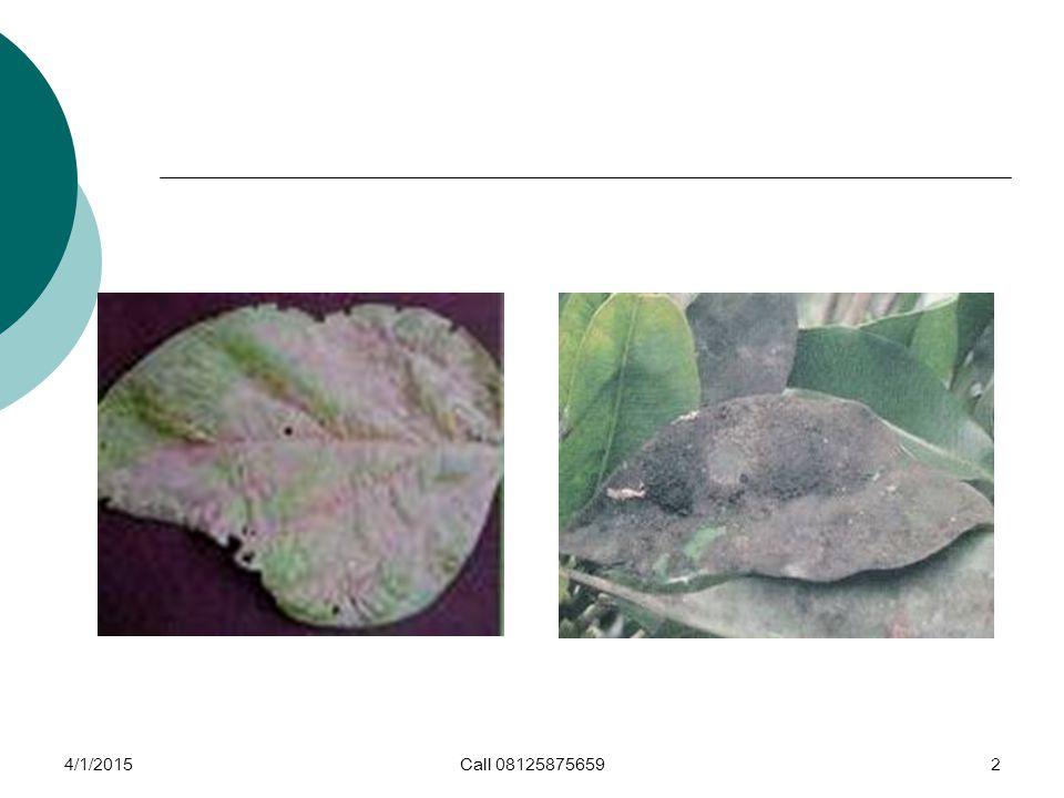 4/1/2015Call 081258756593 Perlindungan Hutan 9 Karat daun (rust), tumor karat (gall rust).