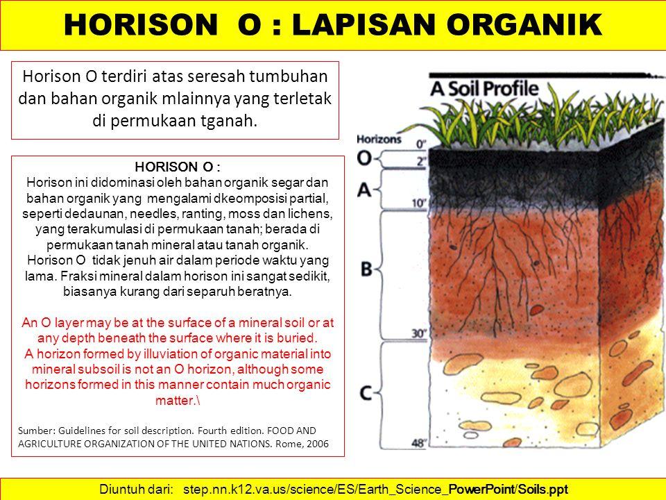 Lapisan ini biasanya longgar dan remah dengan kandungan bahan organik yang beragam.
