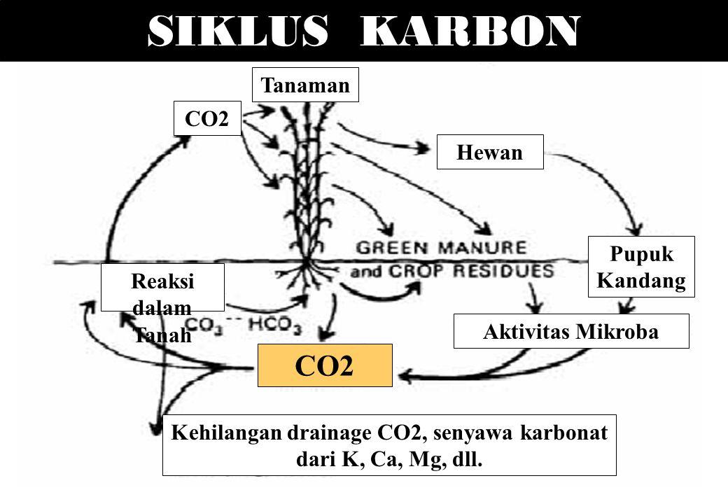 SIKLUS KARBON Tanaman Hewan CO2 Pupuk Kandang Reaksi dalam Tanah CO2 Aktivitas Mikroba Kehilangan drainage CO2, senyawa karbonat dari K, Ca, Mg, dll.