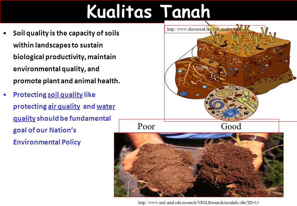 Kualitas Tanah Soil quality is the capacity of soils within landscapes to sustain biological productivity, maintain environmental quality, and promote