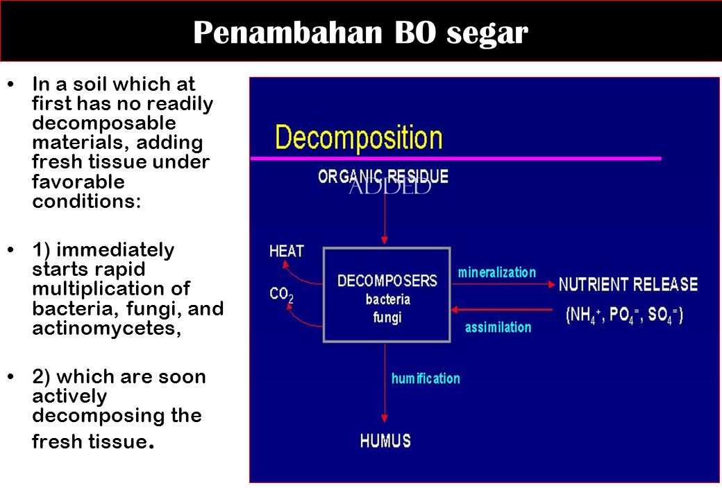 Penambahan BO segar In a soil which at first has no readily decomposable materials, adding fresh tissue under favorable conditions: 1) immediately sta