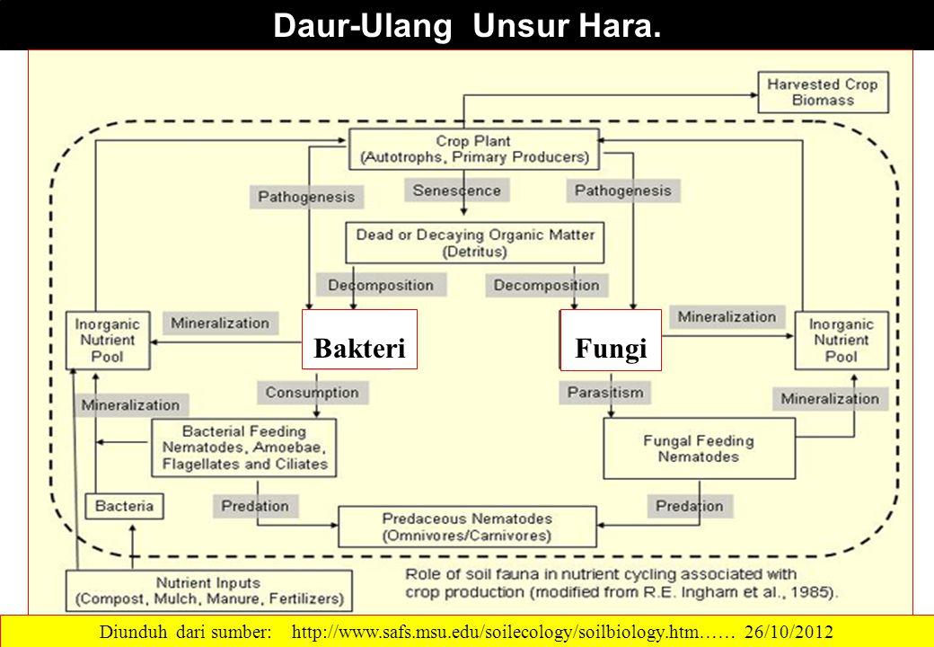 Daur-Ulang Unsur Hara. Diunduh dari sumber: http://www.safs.msu.edu/soilecology/soilbiology.htm…… 26/10/2012 FungiBakteri