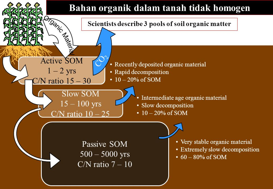 Bahan organik dalam tanah tidak homogen Scientists describe 3 pools of soil organic matter Passive SOM 500 – 5000 yrs C/N ratio 7 – 10 Active SOM 1 –