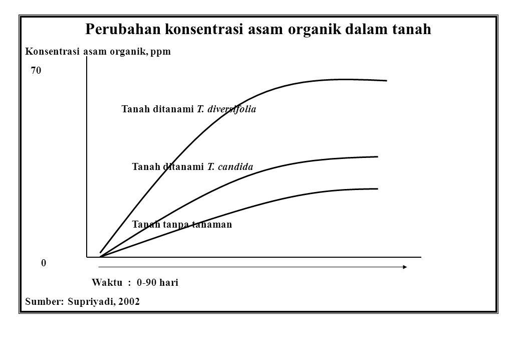 Perubahan konsentrasi asam organik dalam tanah Konsentrasi asam organik, ppm 70 Tanah ditanami T. diversifolia Tanah ditanami T. candida Tanah tanpa t