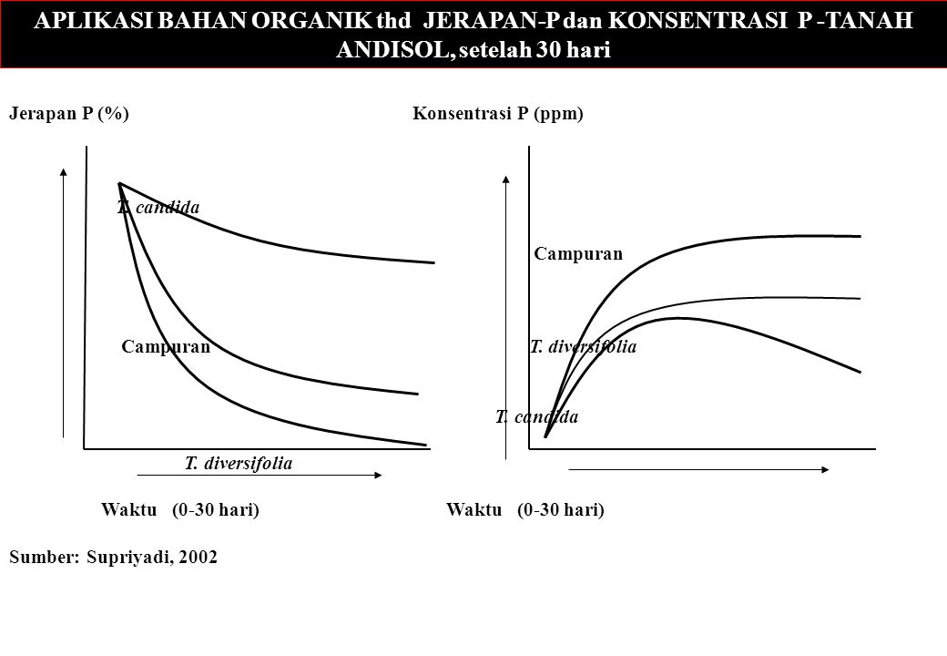 APLIKASI BAHAN ORGANIK thd JERAPAN-P dan KONSENTRASI P -TANAH ANDISOL, setelah 30 hari Jerapan P (%) Konsentrasi P (ppm) T. candida Campuran Campuran