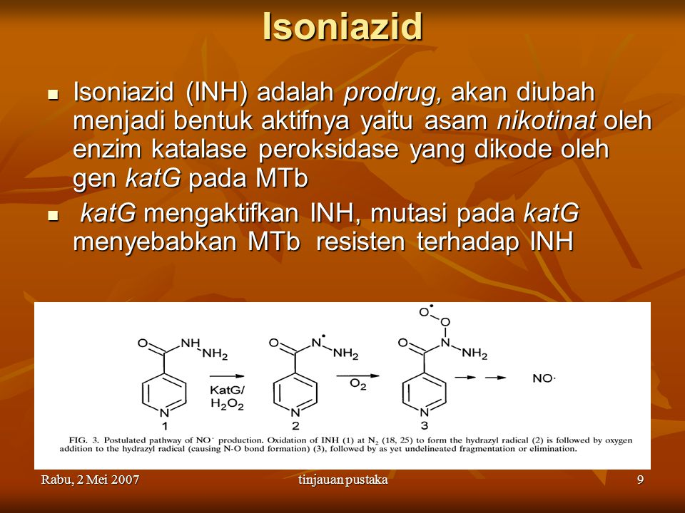 Rabu, 2 Mei 2007tinjauan pustaka10 Katalase peroksidase CPs: enzym yang tergantung heme CPs: enzym yang tergantung heme Melindungi bakteri dari molekul toksik (hidroperoksida) dan hidroksil radikal Melindungi bakteri dari molekul toksik (hidroperoksida) dan hidroksil radikal Homotetramer, 80kDa Homotetramer, 80kDa N-terminal: heme binding motif.
