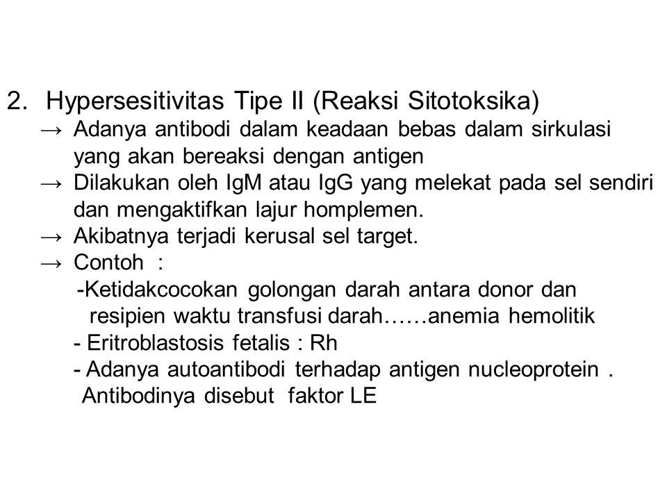 2.Hypersesitivitas Tipe II (Reaksi Sitotoksika) →Adanya antibodi dalam keadaan bebas dalam sirkulasi yang akan bereaksi dengan antigen →Dilakukan oleh