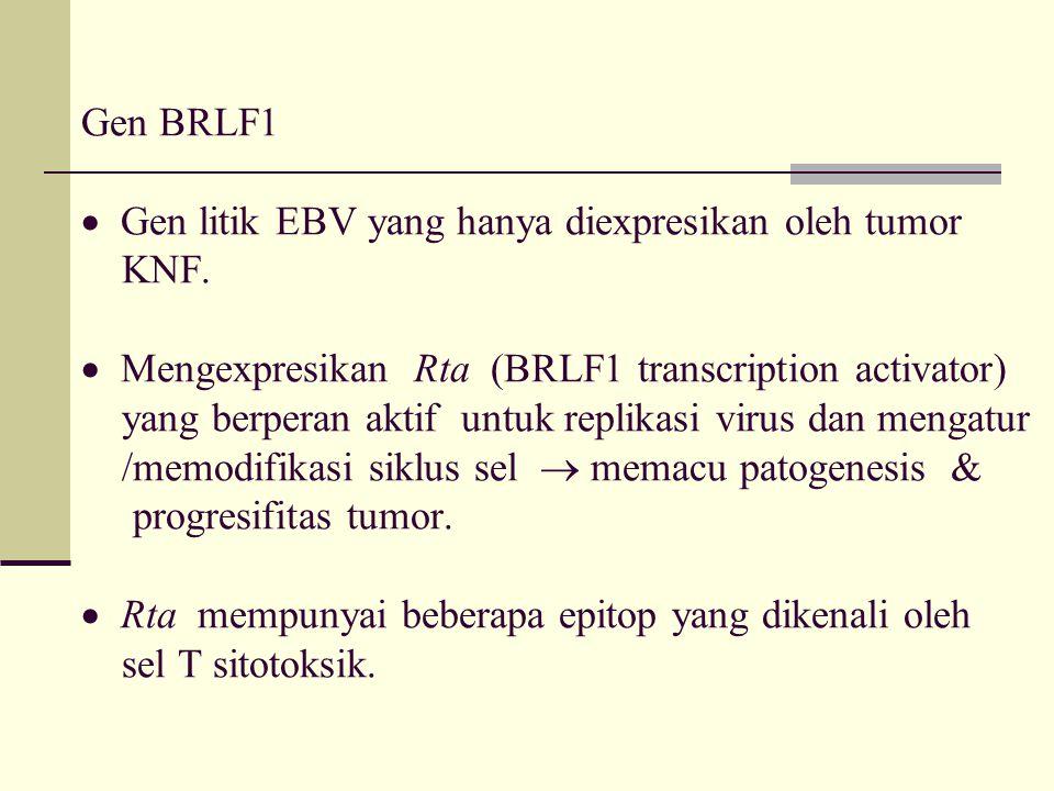 Gen BRLF1  Gen litik EBV yang hanya diexpresikan oleh tumor KNF.  Mengexpresikan Rta (BRLF1 transcription activator) yang berperan aktif untuk repli