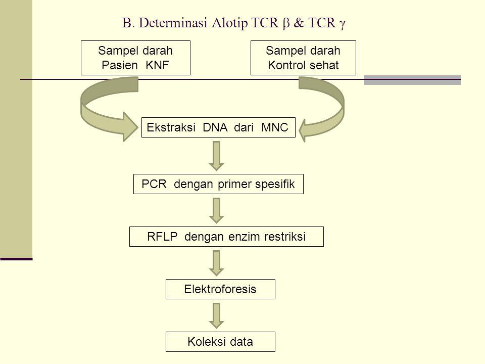B. Determinasi Alotip TCR  & TCR γ Sampel darah Pasien KNF Sampel darah Kontrol sehat Ekstraksi DNA dari MNC PCR dengan primer spesifik RFLP dengan e