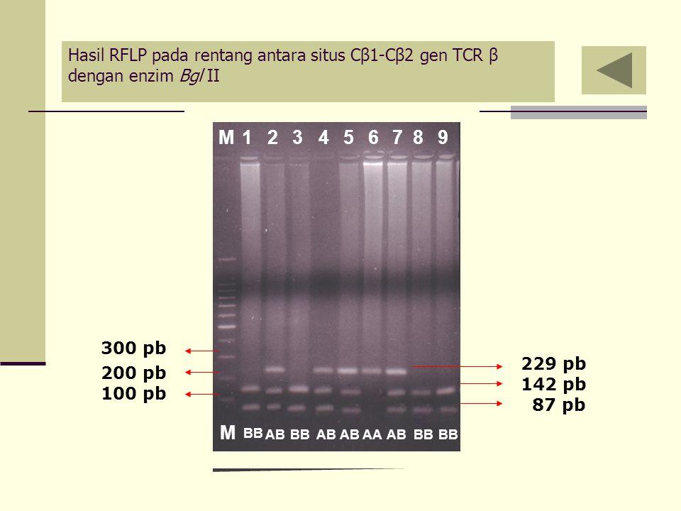 83M1245679 AAAB M BB AB BB 229 pb 142 pb 87 pb 300 pb 200 pb 100 pb Hasil RFLP pada rentang antara situs Cβ1-Cβ2 gen TCR β dengan enzim Bgl II