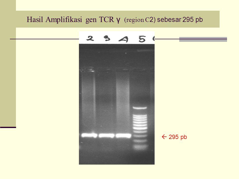 Hasil Amplifikasi gen TCR γ (region C 2) sebesar 295 pb  295 pb
