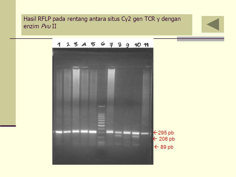 Hasil RFLP pada rentang antara situs C γ 2 gen TCR γ dengan enzim Pvu II  295 pb  206 pb  89 pb