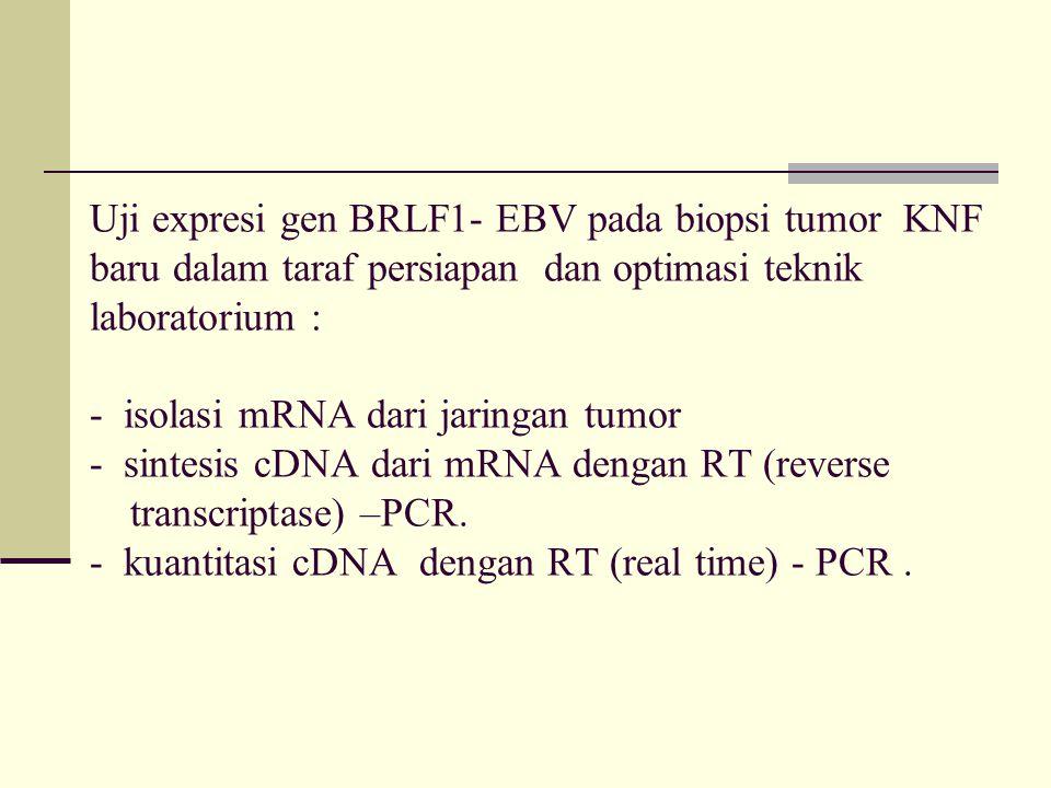 Uji expresi gen BRLF1- EBV pada biopsi tumor KNF baru dalam taraf persiapan dan optimasi teknik laboratorium : - isolasi mRNA dari jaringan tumor - si