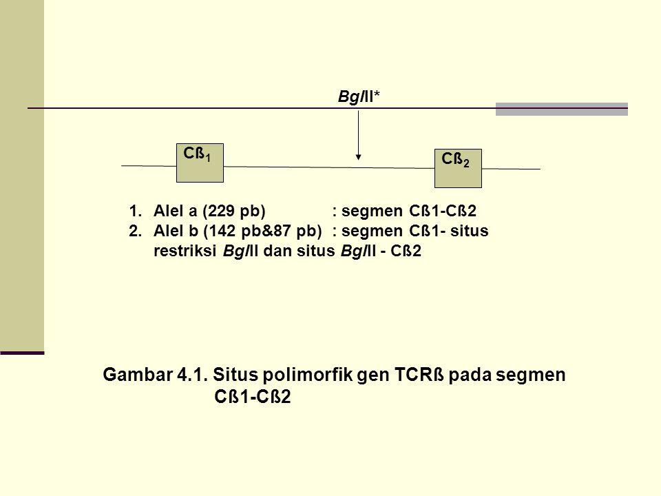 Cß 1 Cß 2 BglII* Gambar 4.1. Situs polimorfik gen TCRß pada segmen Cß1-Cß2 1.Alel a (229 pb) : segmen Cß1-Cß2 2.Alel b (142 pb&87 pb) : segmen Cß1- si