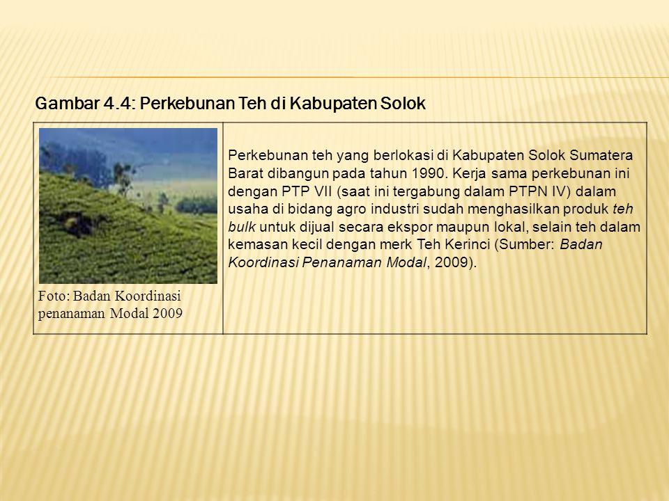 Gambar 4.3g: PT. Bakrie Plantation Pasaman (Sumber foto: tim survei peneliti 2009) Gambar 4.3h: PT. Bakrie Plantation Pasaman (Sumber foto: tim survei