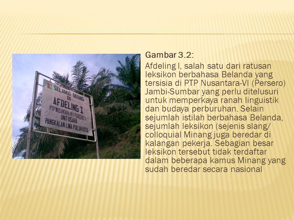 Gambar 1. PTP Nusantara-VI (Persero) Jambi- Sumbar yang terletak di Pangkalan Limo Puluah Kota yang akan dijadikan salah satu objek penelitian tahun 2
