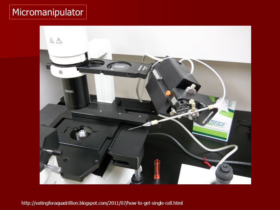 Micromanipulator http://eatingforaquadrillion.blogspot.com/2011/07/how-to-get-single-cell.html