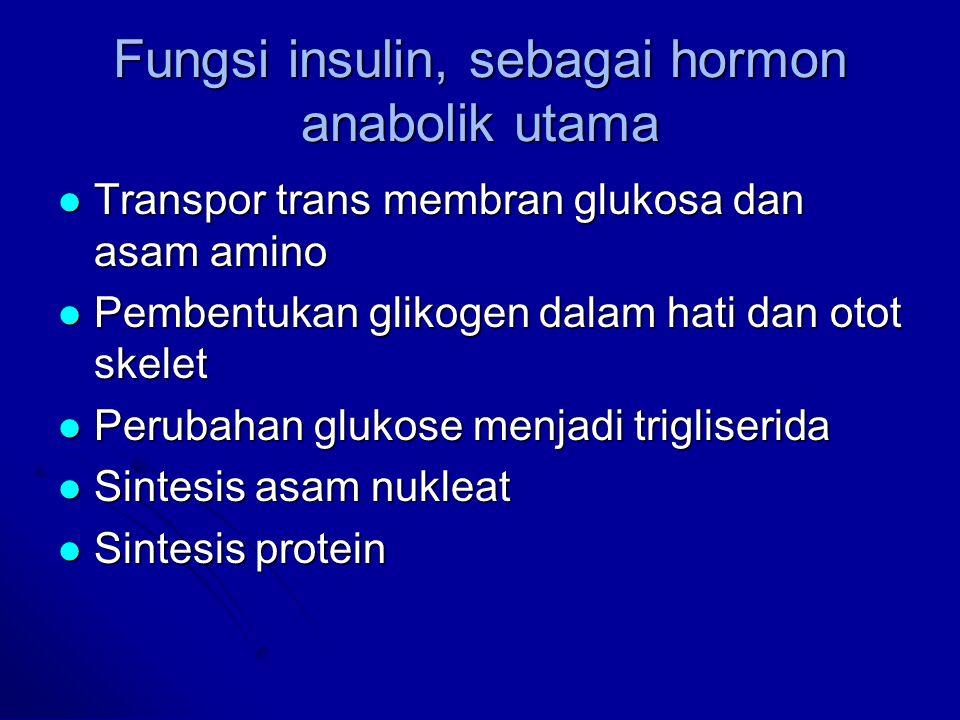 Fungsi insulin, sebagai hormon anabolik utama Transpor trans membran glukosa dan asam amino Transpor trans membran glukosa dan asam amino Pembentukan