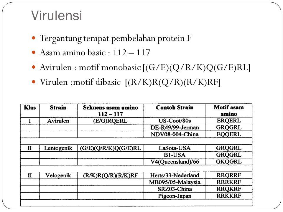 Virulensi Tergantung tempat pembelahan protein F Asam amino basic : 112 – 117 Avirulen : motif monobasic [(G/E)(Q/R/K)Q(G/E)RL] Virulen :motif dibasic