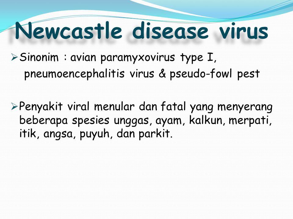Newcastle disease virus  Sinonim : avian paramyxovirus type I, pneumoencephalitis virus & pseudo-fowl pest  Penyakit viral menular dan fatal yang me