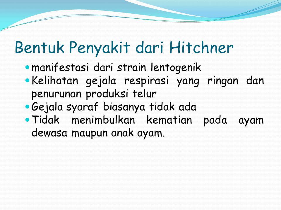 Bentuk Penyakit dari Hitchner manifestasi dari strain lentogenik Kelihatan gejala respirasi yang ringan dan penurunan produksi telur Gejala syaraf bia