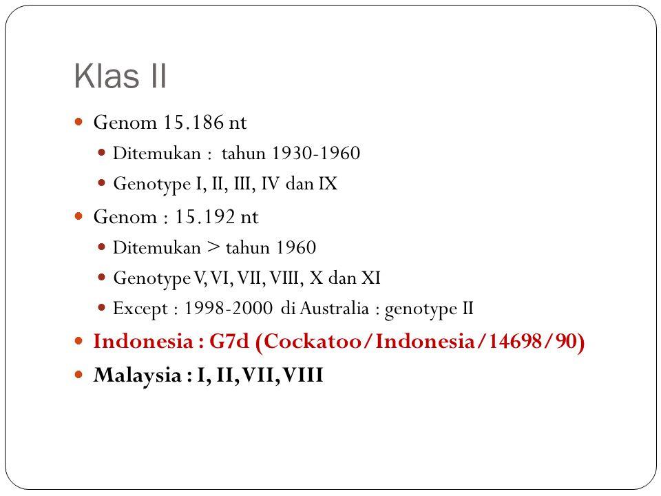 Klas II Genom 15.186 nt Ditemukan : tahun 1930-1960 Genotype I, II, III, IV dan IX Genom : 15.192 nt Ditemukan > tahun 1960 Genotype V, VI, VII, VIII,