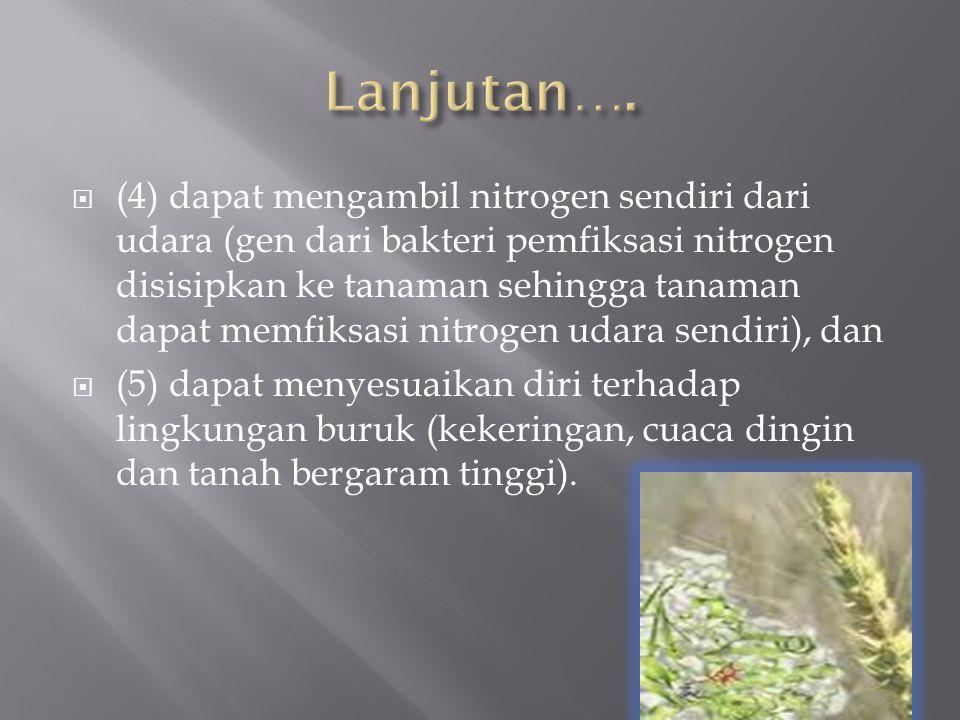  (4) dapat mengambil nitrogen sendiri dari udara (gen dari bakteri pemfiksasi nitrogen disisipkan ke tanaman sehingga tanaman dapat memfiksasi nitrog