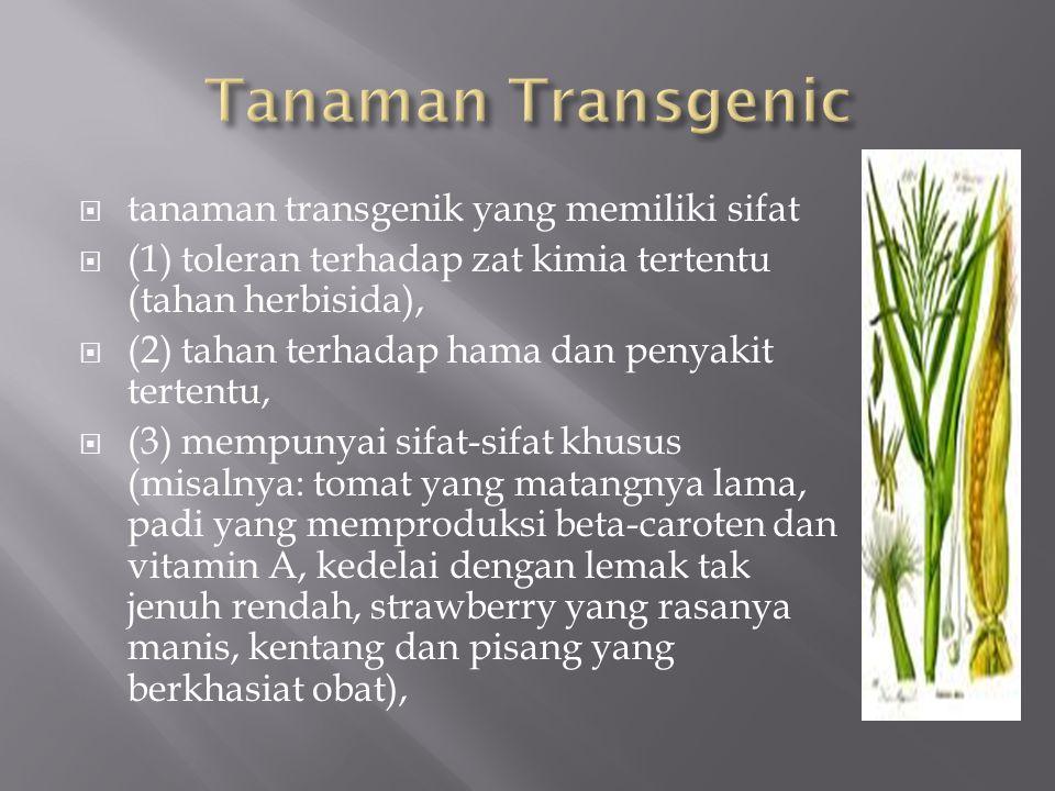  tanaman transgenik yang memiliki sifat  (1) toleran terhadap zat kimia tertentu (tahan herbisida),  (2) tahan terhadap hama dan penyakit tertentu,  (3) mempunyai sifat-sifat khusus (misalnya: tomat yang matangnya lama, padi yang memproduksi beta-caroten dan vitamin A, kedelai dengan lemak tak jenuh rendah, strawberry yang rasanya manis, kentang dan pisang yang berkhasiat obat),