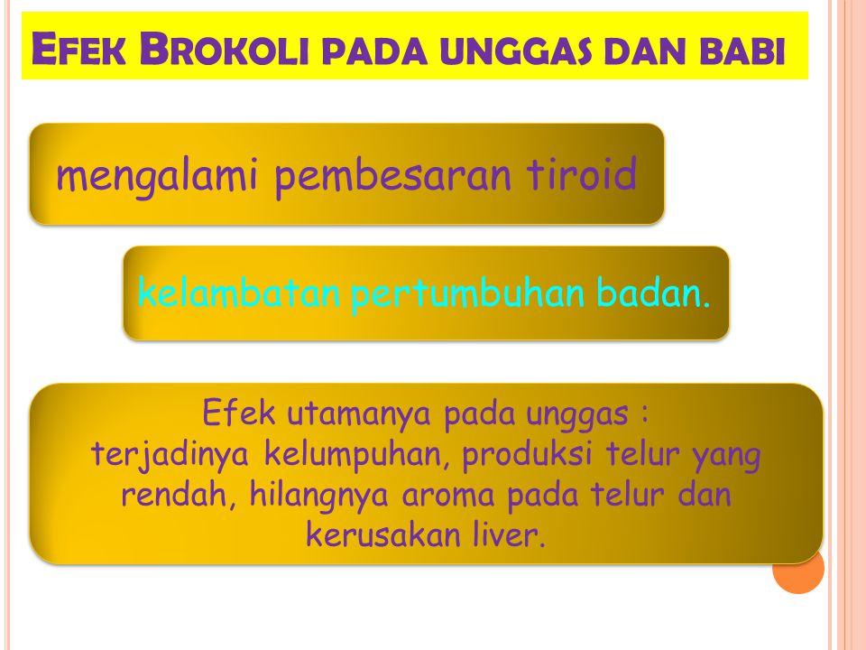 E FEK B ROKOLI PADA UNGGAS DAN BABI Efek utamanya pada unggas : terjadinya kelumpuhan, produksi telur yang rendah, hilangnya aroma pada telur dan kerusakan liver.