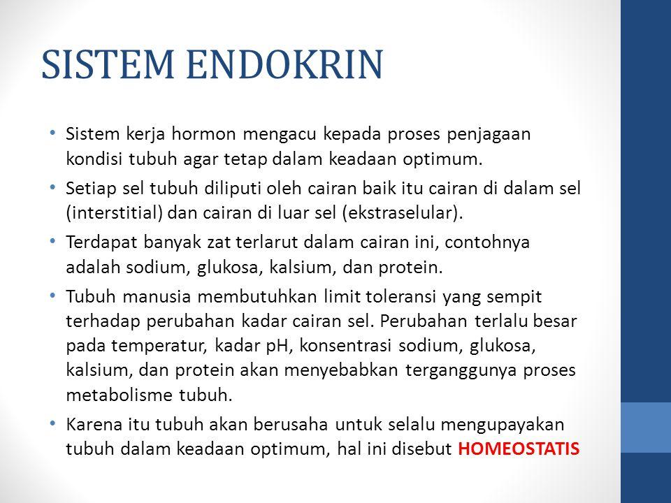SISTEM ENDOKRIN Sistem kerja hormon mengacu kepada proses penjagaan kondisi tubuh agar tetap dalam keadaan optimum.