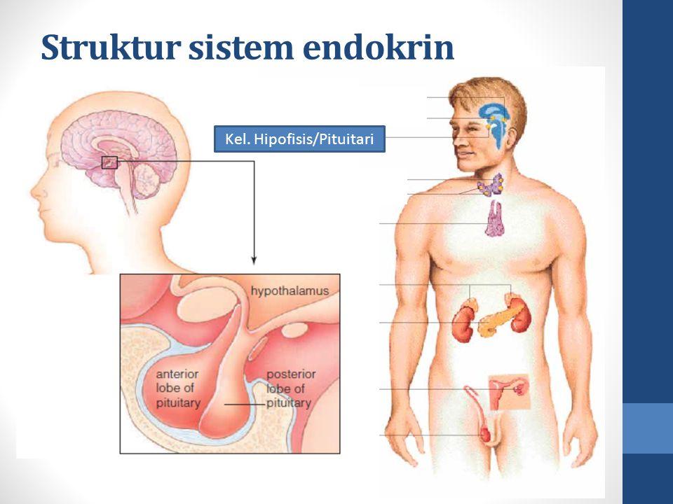 Kel. Hipofisis/Pituitari