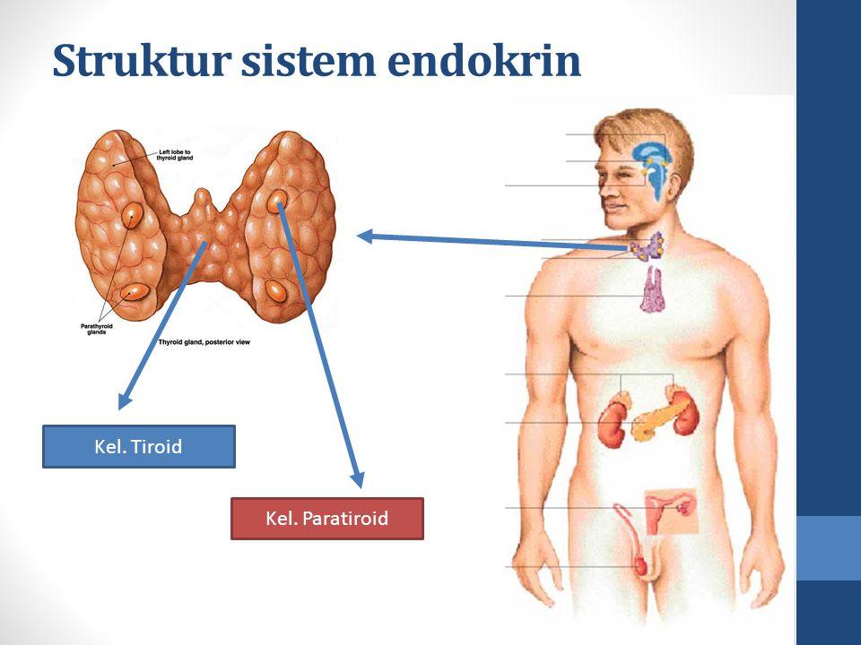 Struktur sistem endokrin Kel. Paratiroid Kel. Tiroid