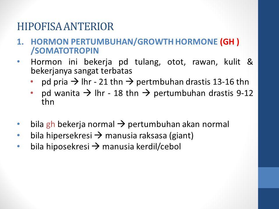 HIPOFISA ANTERIOR 1.HORMON PERTUMBUHAN/GROWTH HORMONE (GH ) /SOMATOTROPIN Hormon ini bekerja pd tulang, otot, rawan, kulit & bekerjanya sangat terbatas pd pria  lhr - 21 thn  pertmbuhan drastis 13-16 thn pd wanita  lhr - 18 thn  pertumbuhan drastis 9-12 thn bila gh bekerja normal  pertumbuhan akan normal bila hipersekresi  manusia raksasa (giant) bila hiposekresi  manusia kerdil/cebol