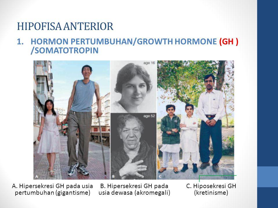 HIPOFISA ANTERIOR 1.HORMON PERTUMBUHAN/GROWTH HORMONE (GH ) /SOMATOTROPIN A.