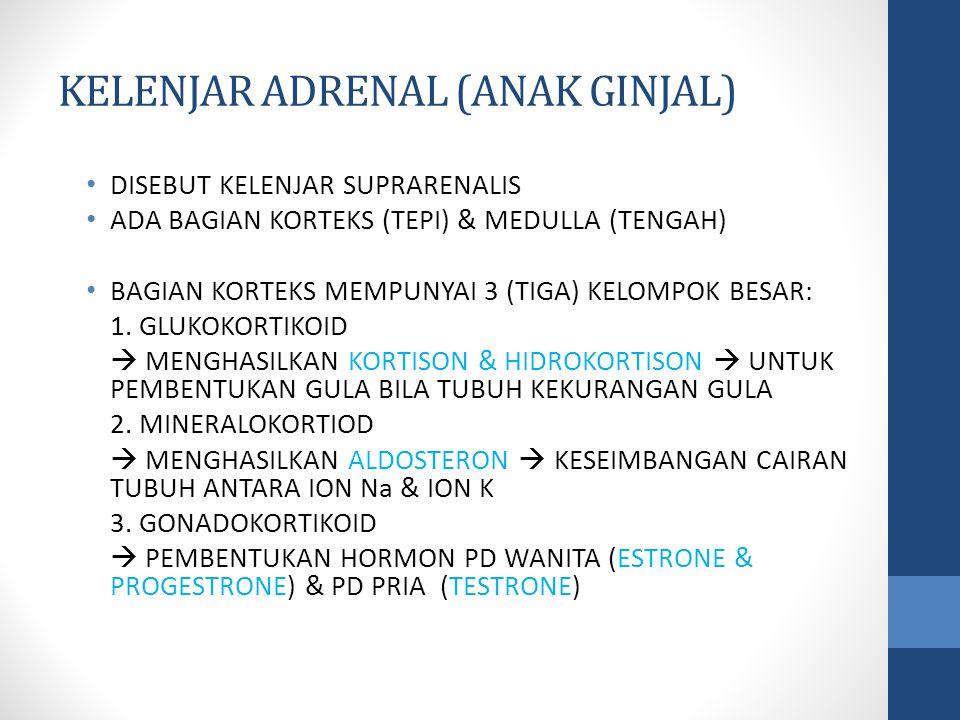 KELENJAR ADRENAL (ANAK GINJAL) DISEBUT KELENJAR SUPRARENALIS ADA BAGIAN KORTEKS (TEPI) & MEDULLA (TENGAH) BAGIAN KORTEKS MEMPUNYAI 3 (TIGA) KELOMPOK BESAR: 1.