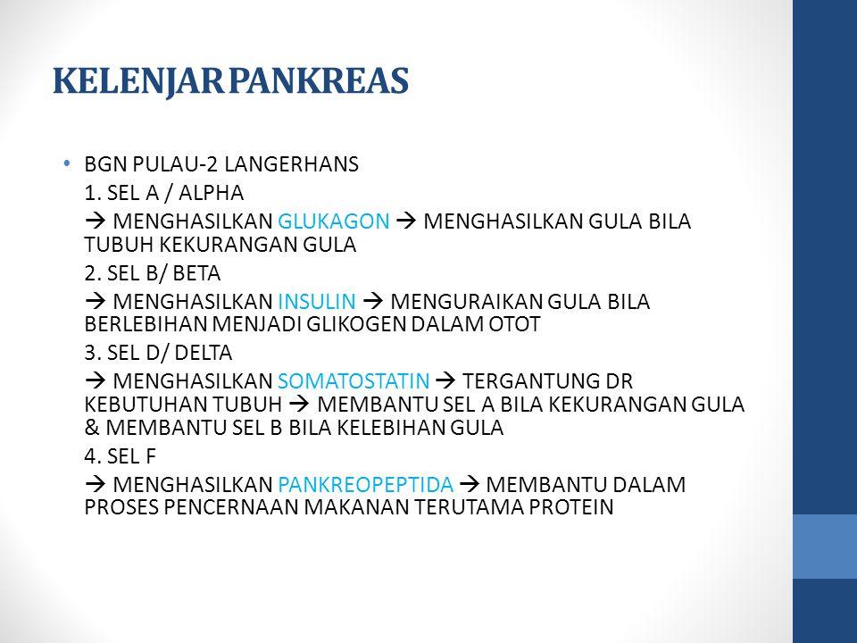 KELENJAR PANKREAS BGN PULAU-2 LANGERHANS 1.