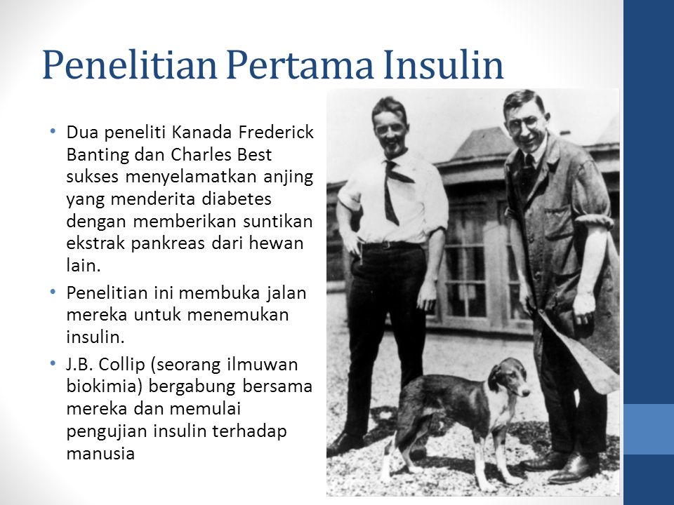 Penelitian Pertama Insulin Dua peneliti Kanada Frederick Banting dan Charles Best sukses menyelamatkan anjing yang menderita diabetes dengan memberikan suntikan ekstrak pankreas dari hewan lain.