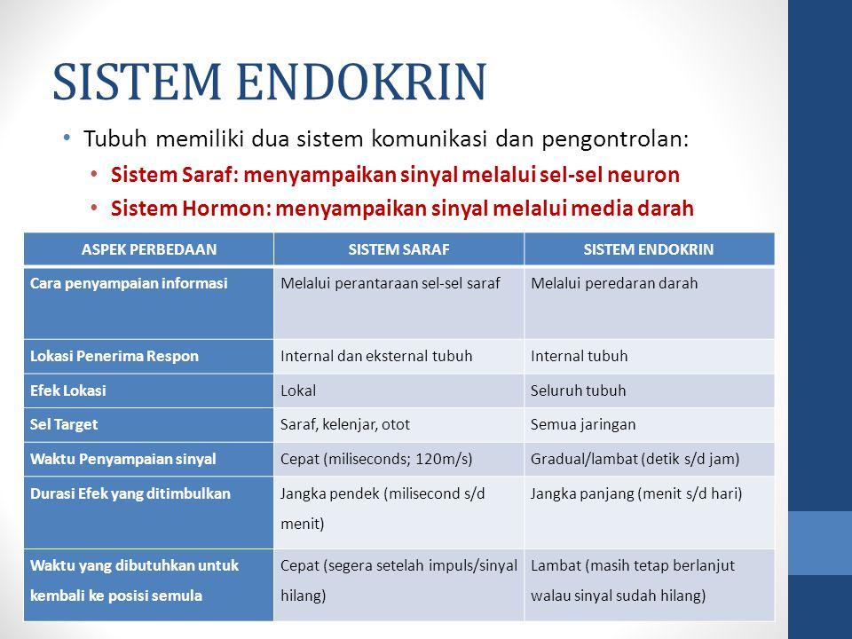 Struktur sistem endokrin Kel. Timus