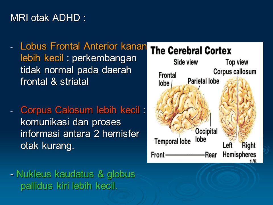 MRI otak ADHD : - Lobus Frontal Anterior kanan lebih kecil : perkembangan tidak normal pada daerah frontal & striatal - Corpus Calosum lebih kecil : komunikasi dan proses informasi antara 2 hemisfer otak kurang.