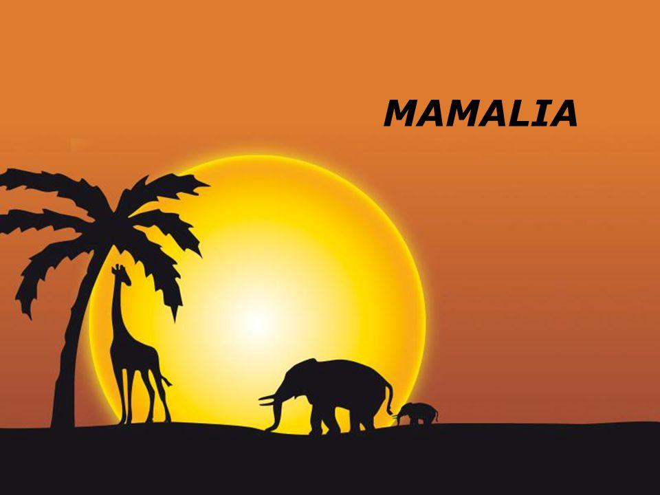 Page 1 MAMALIA