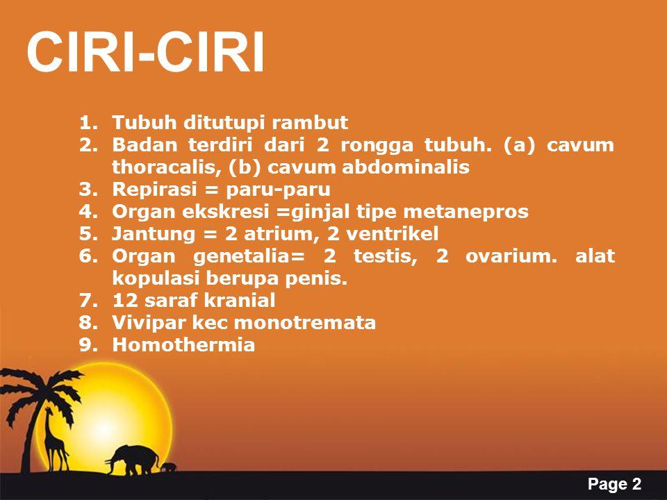 Page 2 CIRI-CIRI 1.Tubuh ditutupi rambut 2.Badan terdiri dari 2 rongga tubuh. (a) cavum thoracalis, (b) cavum abdominalis 3.Repirasi = paru-paru 4.Org