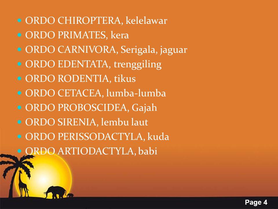 Page 4 ORDO CHIROPTERA, kelelawar ORDO PRIMATES, kera ORDO CARNIVORA, Serigala, jaguar ORDO EDENTATA, trenggiling ORDO RODENTIA, tikus ORDO CETACEA, l