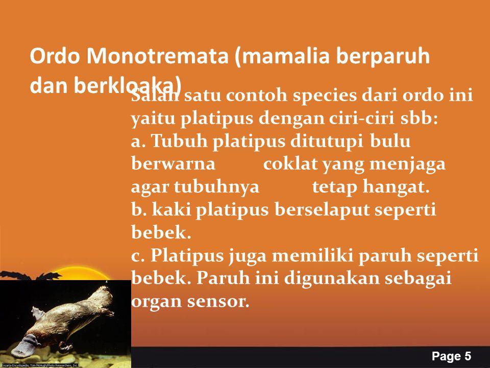 Page 5 Ordo Monotremata (mamalia berparuh dan berkloaka) Salah satu contoh species dari ordo ini yaitu platipus dengan ciri-ciri sbb: a. Tubuh platipu
