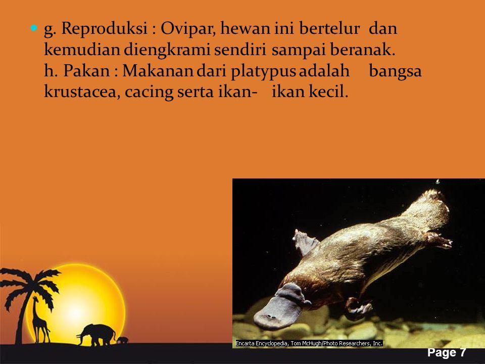 Page 7 g. Reproduksi : Ovipar, hewan ini bertelur dan kemudian diengkrami sendiri sampai beranak. h. Pakan : Makanan dari platypus adalah bangsa krust
