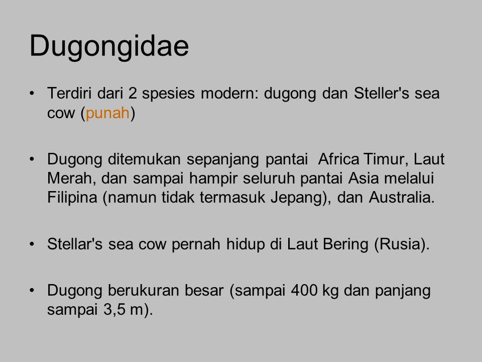 Terdiri dari 2 spesies modern: dugong dan Steller s sea cow (punah) Dugong ditemukan sepanjang pantai Africa Timur, Laut Merah, dan sampai hampir seluruh pantai Asia melalui Filipina (namun tidak termasuk Jepang), dan Australia.
